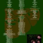 SGTMM003CD1-2-3-4-5DVD1